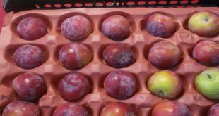 شانه میوه شابلون