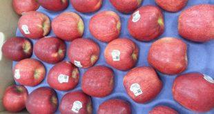 عرضه کننده انواع شانه میوه کاغذی