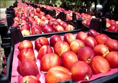 فروش شانه میوه در شمال